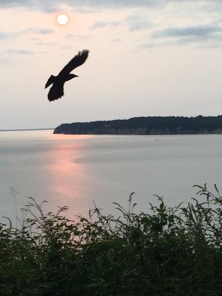 Bird over river