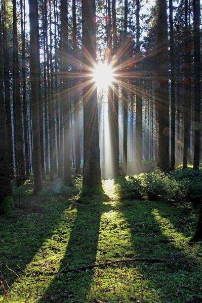 suns rays through trees