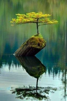 tree adapt